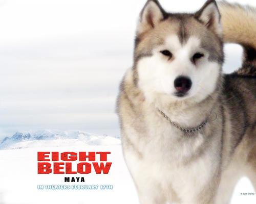 南极大冒险Eight below(2006)桌面 #05b