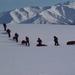 南极日记 23